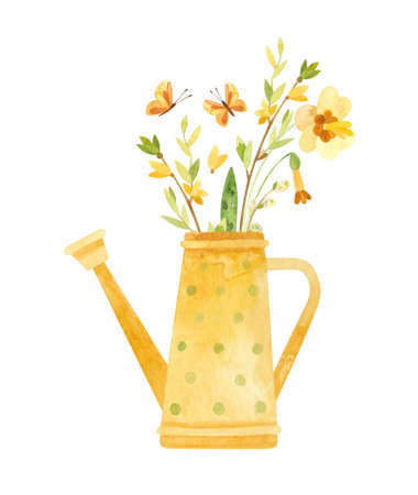 Yellow watering can with spring flowers - daffodils, pussy-willow and forsythia. Rustic watercolor illustration for Easter cards, posters, banners. Фото со стока