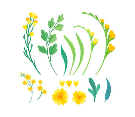 Yellow floral elements. Blooming spring flowers and green leaves for greeting card, invitation card design elements pack. Иллюстрация