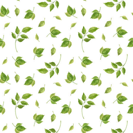 Rose leaves seamless pattern. Floral background in vintage style. Watercolor clipart.