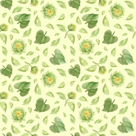 Sunflower buds and leaves seamless pattern. Watercolor clipart on green background