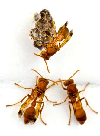 Closeup shot of three wasp doing a teamwork.
