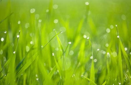 Closeup of an dew & grass on winter morning. Archivio Fotografico