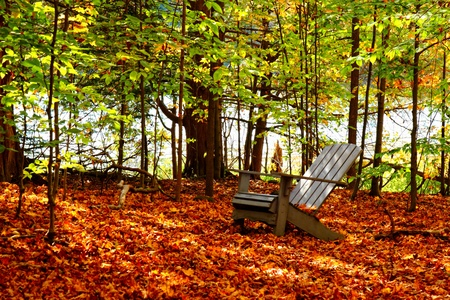 wooden chair in autumn forest leaves Stock Photo - 11732987