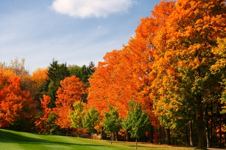 colorful autumn leaves in park photo