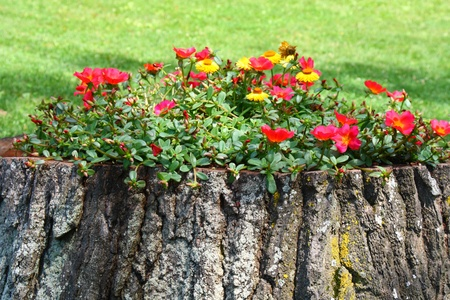old tree trunk flower pot creative gardening Stock Photo - 11733117