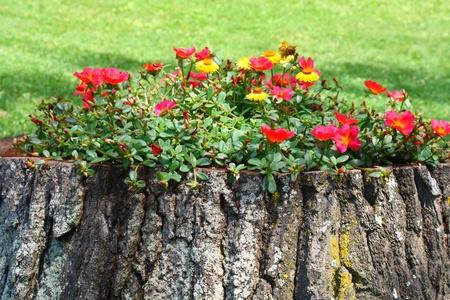 old tree trunk flower pot creative gardening Stock Photo - 11733117