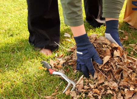 cleaning up leaves in the yard photo