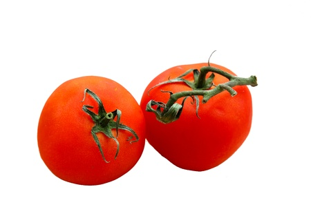 fresh red organic tomatoes with vine still attached isolated
