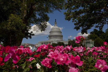 us capitol: U.S. Capitol in Washington D.C. Stock Photo