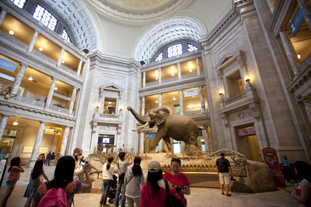 diorama: The National Museum of Natural History is a natural history museum administered by the Smithsonian Institution, located on the National Mall in Washington, D.C., United States.