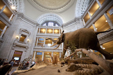 The National Museum of Natural History is a natural history museum administered by the Smithsonian Institution, located on the National Mall in Washington, D.C., United States.
