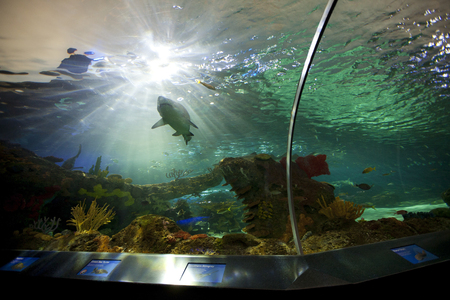 sightsee: TORONTO- SEPTEMBER 15, 2014: Shark tank at Ripleys Aquarium Canada loacated at the foot of the CN tower in Toronto. Editorial