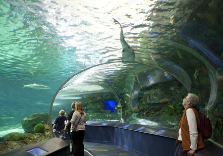 TORONTO- SEPTEMBER 15, 2014: Tourists admires the shark display tank at Ripleys Aquarium in Torornto on September 15, 2014.