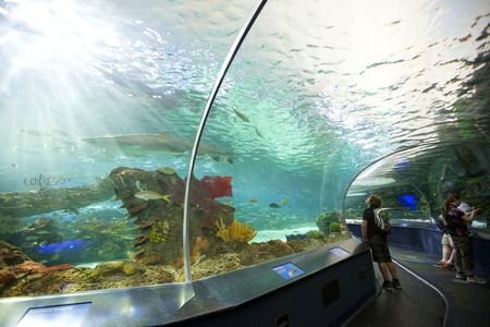 sightsee: TORONTO- SEPTEMBER 15, 2014: Tourists admires the sharkl display tank at Ripleys Aquarium in Torornto on September 15, 2014.