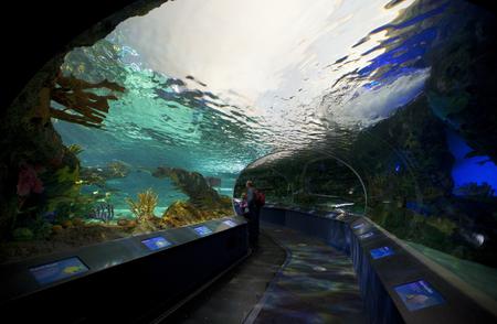 TORONTO- SEPTEMBER 15, 2014: Tourists admires the marinel display tank at Ripleys Aquarium in Torornto on September 15, 2014.