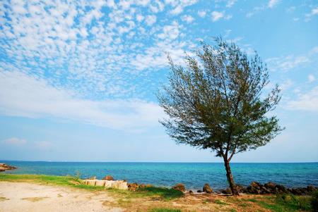 sight seeing: Tree beside the sea, sight seeing
