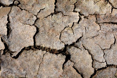 dreamy: abstract wheel trail, dry soil, sweet dreamy