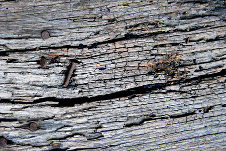 Old wood log with old nail as background