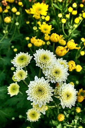 white flower in the garden Stock fotó