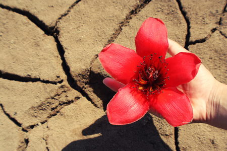 Red flowers on drought