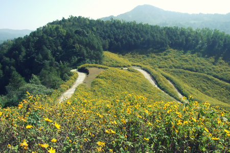 Yellow field on the hill, land scape, beautiful scene
