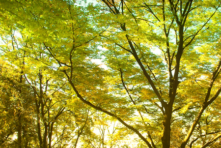 Yellow leaf with wood bench in autumn season in the garden in Seoul, South Korea Stock fotó