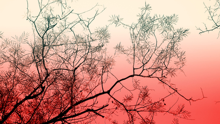Lots of branch, shadow from tree, dreamy color