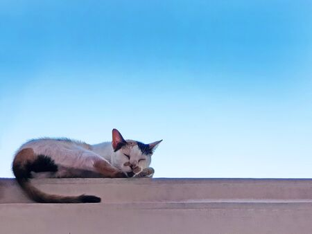 cat sleeping or rest on the wall