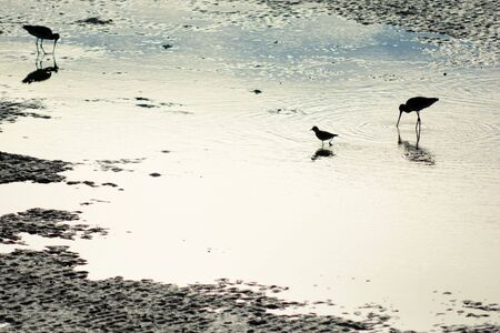 a small bird, egret, stand in the mangrove forest, silhouette