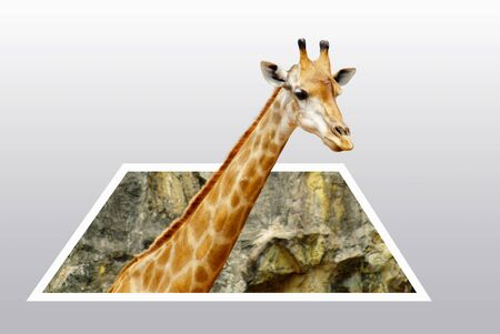 Giraffe isolated look like 3D popup from the paper