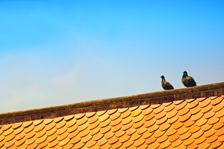 2 birds on the roof