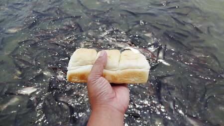 Long loaf bread pattern Feed the fish with bread Фото со стока