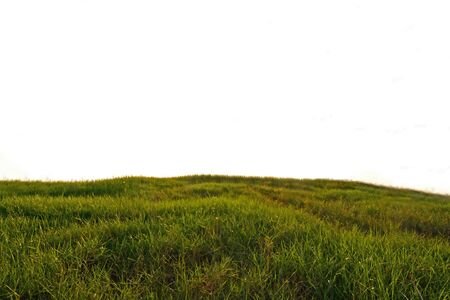 Meadow grass on isolate background