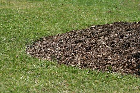 paillis: une image de paillis autour d'un arbre Banque d'images