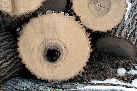 Hollow Log Stock fotó