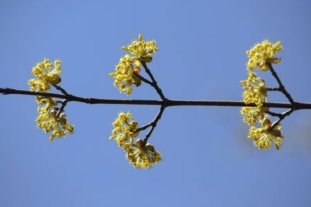 an image of Tree Blossoms on a branch photo