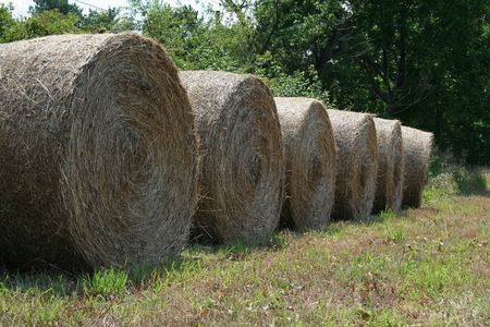 an image of hay rolls