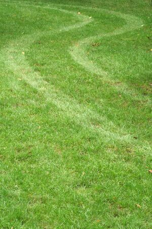 a set of Tire tracks in the grass Imagens