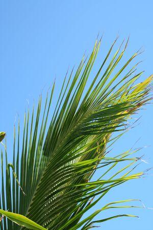 palm frond: Un ramo di palma contro un cielo blu