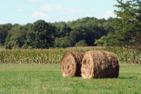 Two Hay rolls near a corn field Stock Photo - 1695588