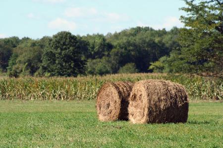 Two Hay rolls near a corn field Stock Photo - 1695588
