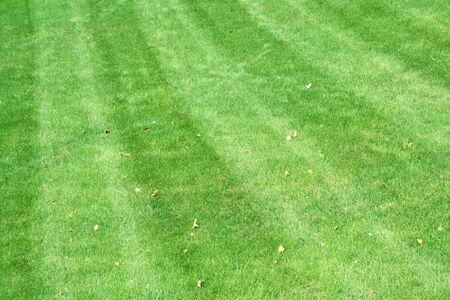 cut grass: some Lawnmower tracks in green cut grass Stock Photo