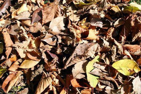 dead leaves: Hojas muertas de fondo