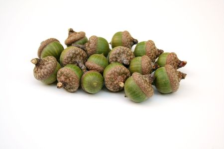 A pile of Acorns isolated on white photo