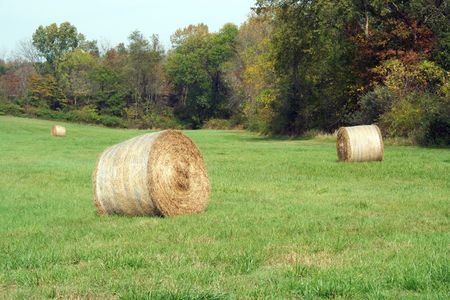 Hay Rolls in a green field with trees Stock Photo - 1944436