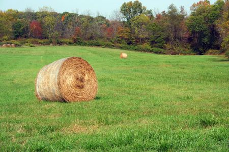 Hay Rolls in a green field with trees Stock Photo - 1961351