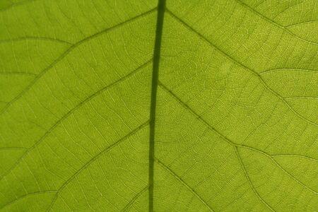 葉の静脈のイメージ