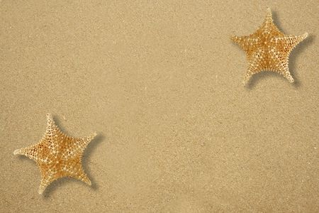 echinoderm: Two star fish on the sandy beach