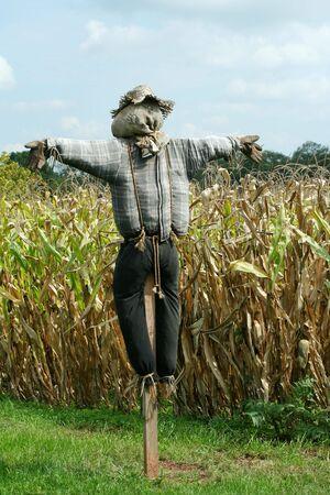 トウモロコシ畑を保護するかかし