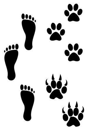 Three Foot and paw prints  Vector